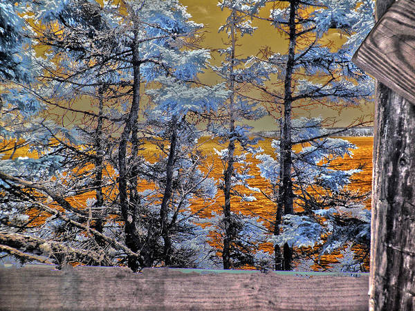 Infrared Photograph - River Of Fire by Bob LaForce