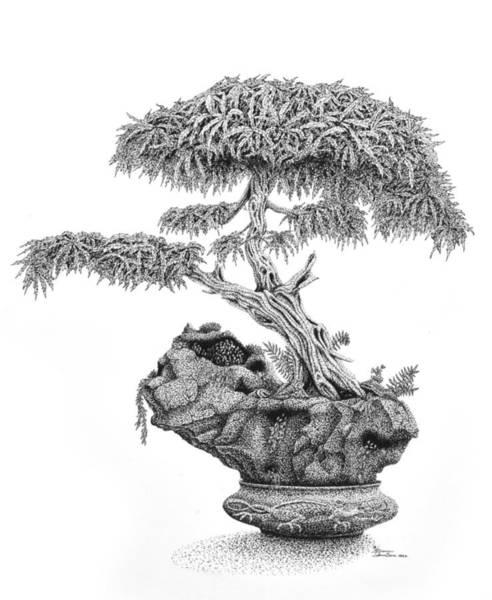 Photograph - Subliminal Bonsai by Sam Davis Johnson