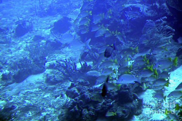 Photograph - Submarine Underwater View by Tatiana Travelways
