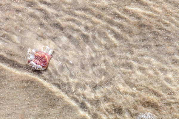 Beachscape Photograph - Submerged by W Chris Fooshee