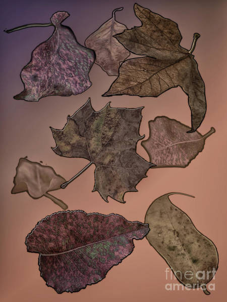 Digital Art - Subtle Autumn by Judy Hall-Folde