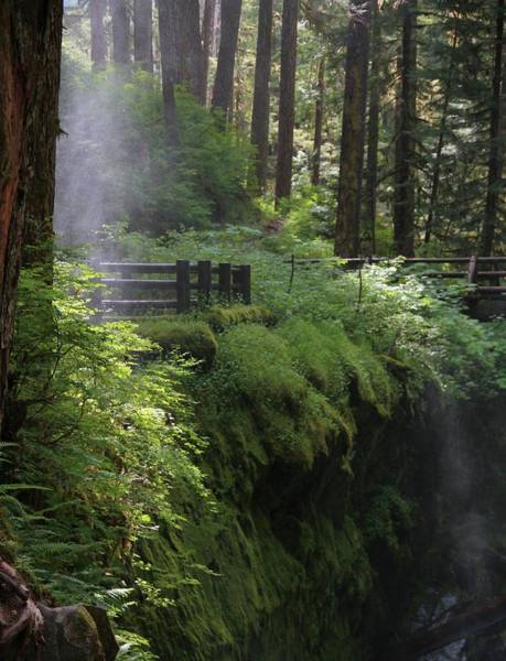 Wall Art - Photograph - Subtle Light At Sol Duc by Dan Sproul