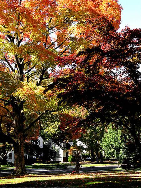 Photograph - Suburban Autumn by Susan Savad