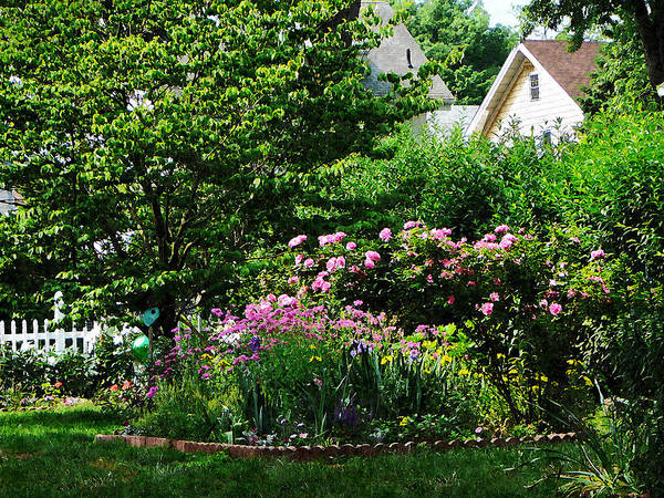 Photograph - Suburban Garden With Roses by Susan Savad
