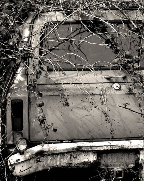 Wall Art - Photograph - Suburban Jungle by Everett Bowers