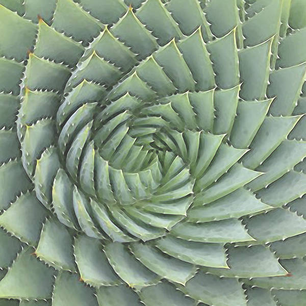 Digital Art - Succulent 1 by David Hansen