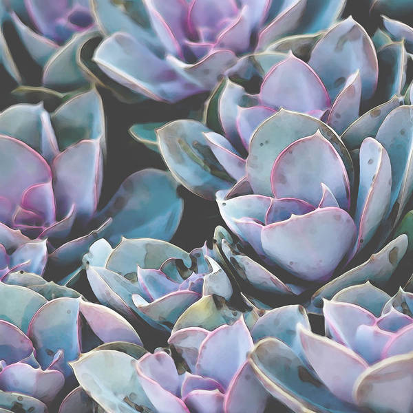 Digital Art - Succulent 10 by David Hansen
