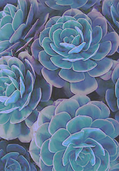 Digital Art - Succulent 3 by David Hansen