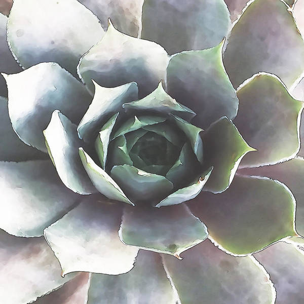 Digital Art - Succulent 4 by David Hansen