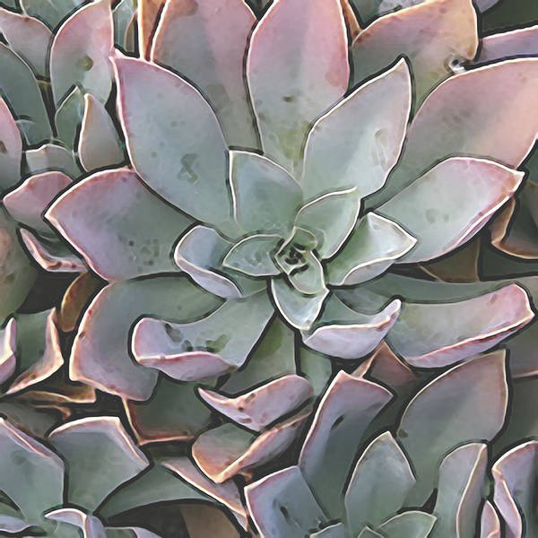 Digital Art - Succulent 5 by David Hansen