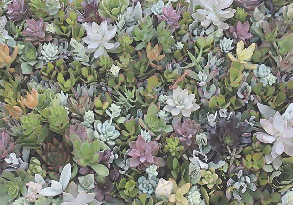 Digital Art - Succulent 8 by David Hansen