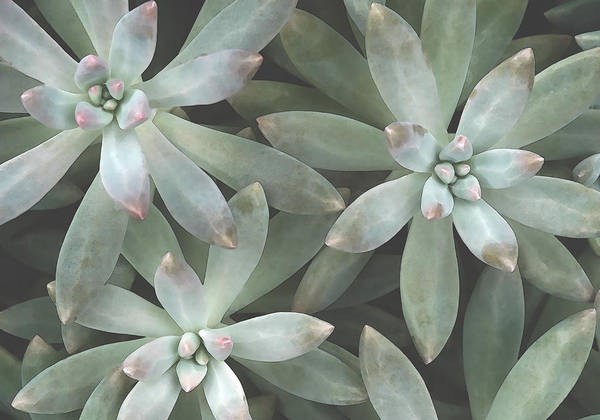 Digital Art - Succulent 9 by David Hansen