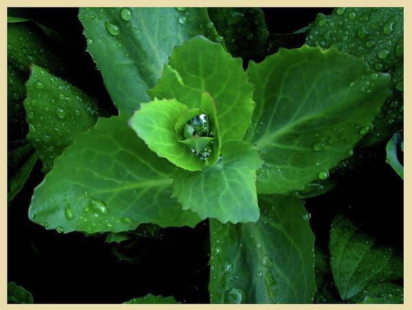 Photograph - Succulent After The Rain  by Leon De Vose