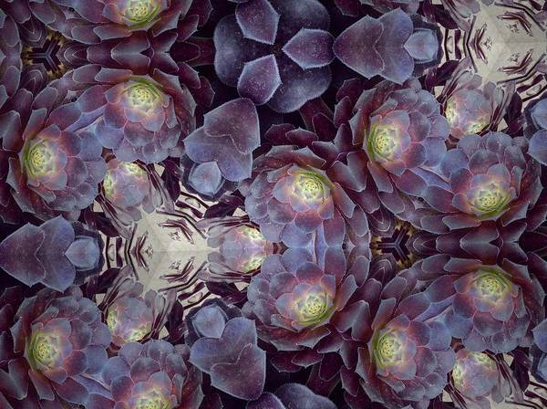 Photograph - Succulent And Lavender by Sylvan Adams