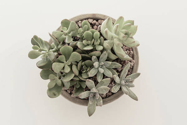 Photograph - Succulent Plant From The Top by Kim Hojnacki
