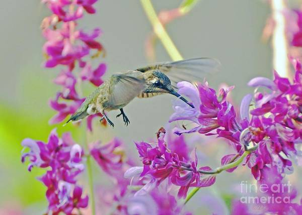 Wall Art - Photograph - Succulent Purple Sage by Debby Pueschel