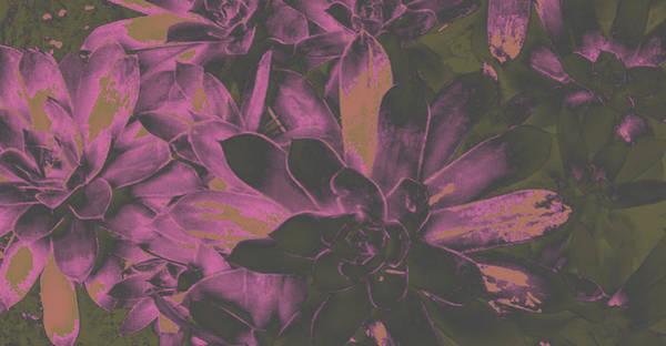 Photograph - Succulents #3 by Anne Westlund