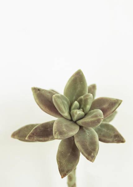 Succulent Photograph - Succulents Flowers Colour by Ana Martinez