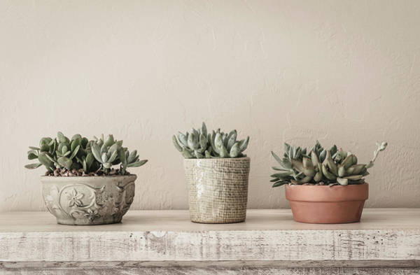 Photograph - Succulents In Pots by Kim Hojnacki