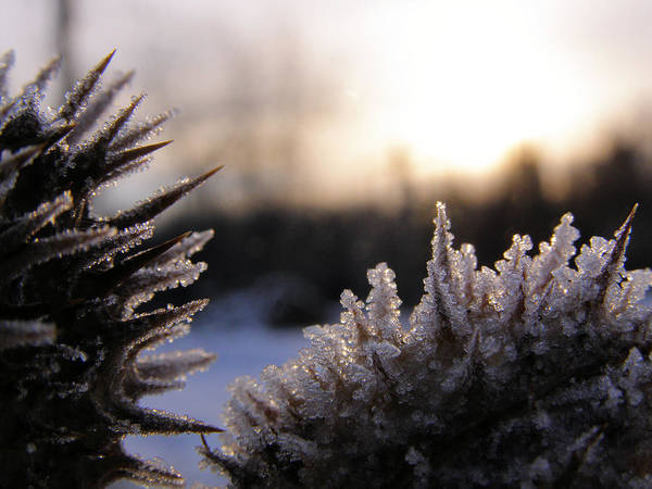 Photograph - Sugar Crystals by Scott Hovind