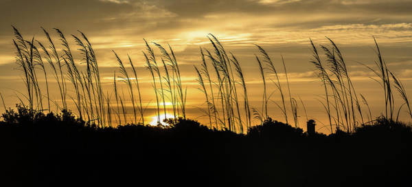 Photograph - Sullivan's Island Sunrise Silhouette by Donnie Whitaker