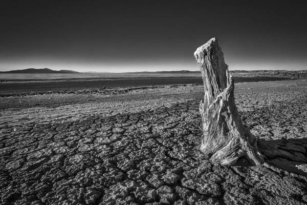 Photograph - Sultry Salt Tree by Peter Tellone