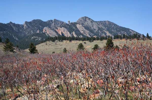 Photograph - Sumac And Flatirons by Marilyn Hunt