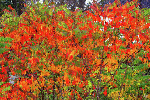 Photograph - Sumac Canvas by Wayne King