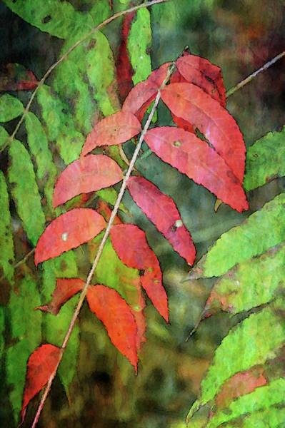 Photograph - Sumac Leaves 4051 Idp_2 by Steven Ward