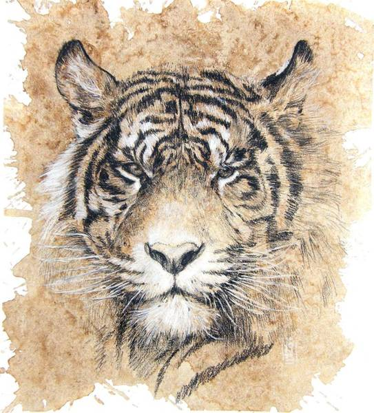 White Tiger Drawing - Sumatra by Debra Jones