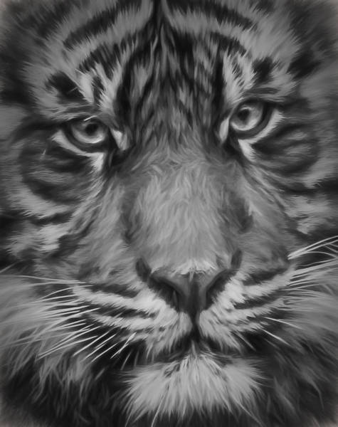 Photograph - Sumatran Tiger Black And White by Wes and Dotty Weber