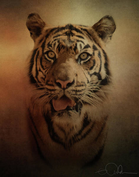 Photograph - Sumatran Tiger by Gloria Anderson