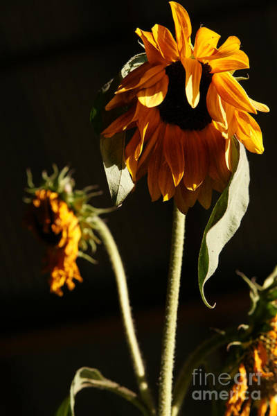 Photograph - Summer And The Beat Of Your Heart by Linda Shafer