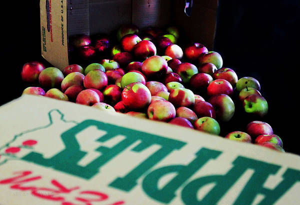 Photograph - Summer Apples by Susan Vineyard