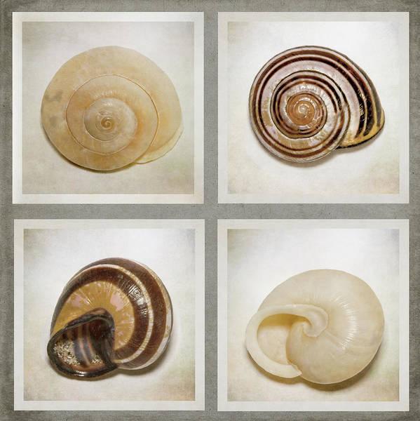 Digital Art - Summer Beach Shells by Eduardo Tavares