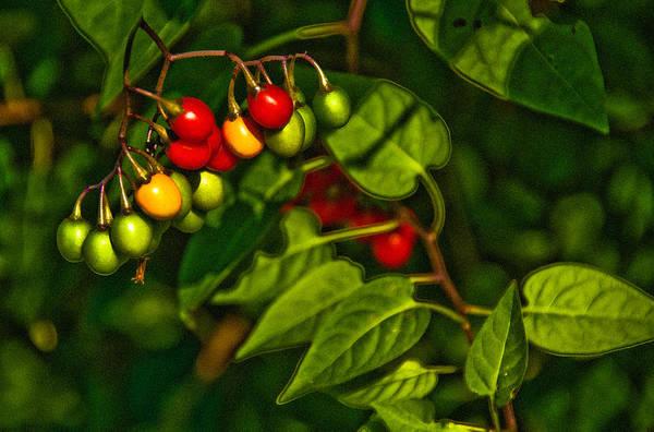 Photograph - Summer Berries by  Onyonet  Photo Studios
