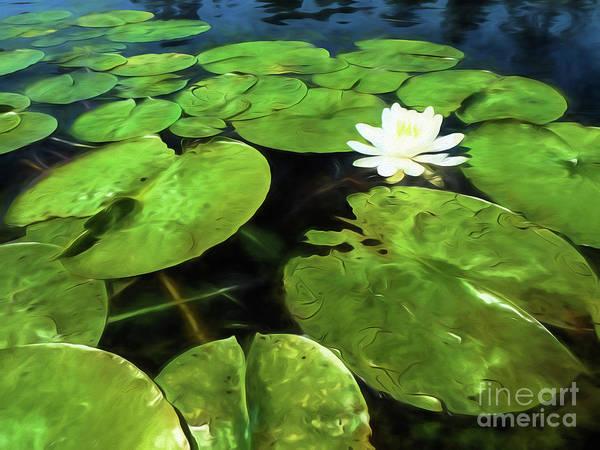 Digital Art - Summer Bloom by Lori Dobbs