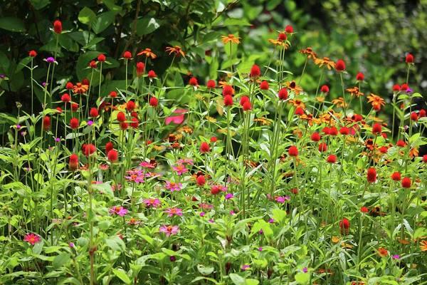 Photograph - Summer Blossoms by Cynthia Guinn