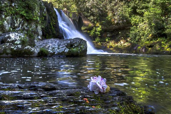 Photograph - Summer Bouquet by Debra and Dave Vanderlaan