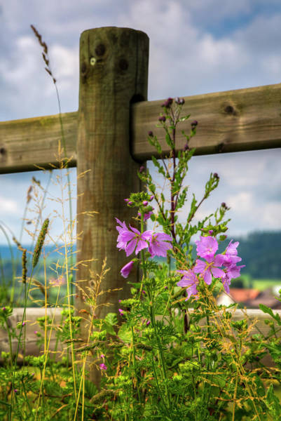 Photograph - Summer Breeze In The Afternoon by Debra and Dave Vanderlaan