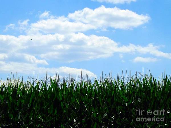Photograph - Summer Breeze by Robyn King