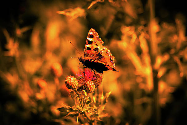 Wall Art - Photograph - Summer Butterfly Colour Photograph. by Nigel Dudson