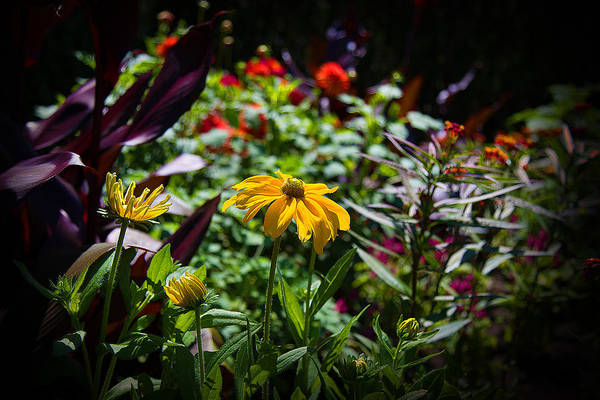 Photograph - Summer Colors by Milena Ilieva