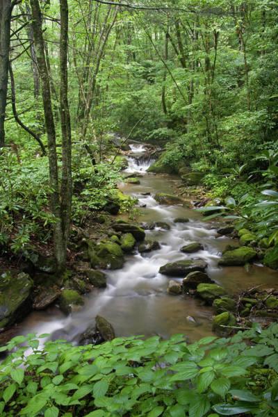 Photograph - Summer Creek by Jill Lang