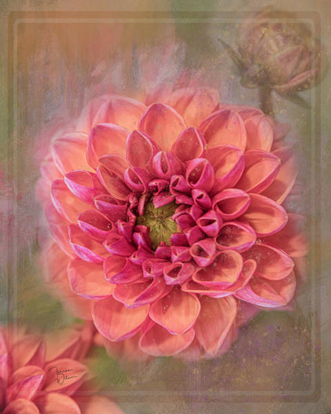 Digital Art - Summer Dahlia by Teresa Wilson