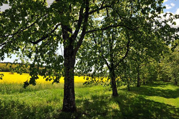 Photograph - Summer Day by Randi Grace Nilsberg