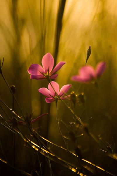 Photograph - Summer Days by Parker Cunningham