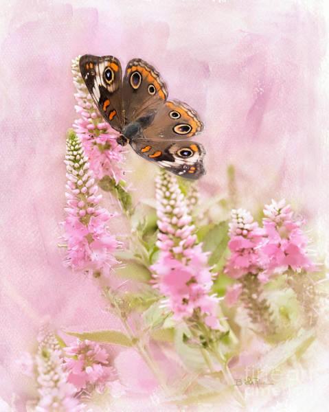 Buckeye Butterfly Wall Art - Photograph - Summer Daze by Betty LaRue