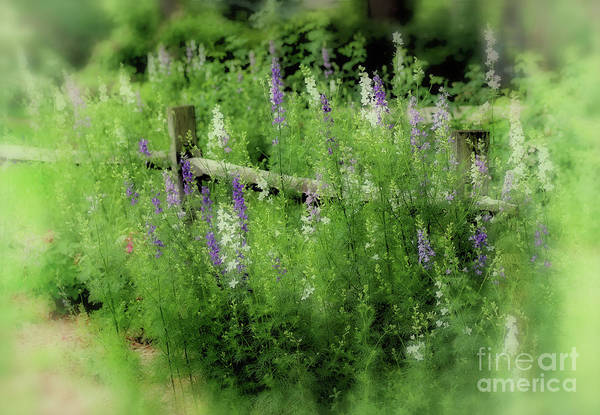Photograph - Summer Dream by Karen Adams
