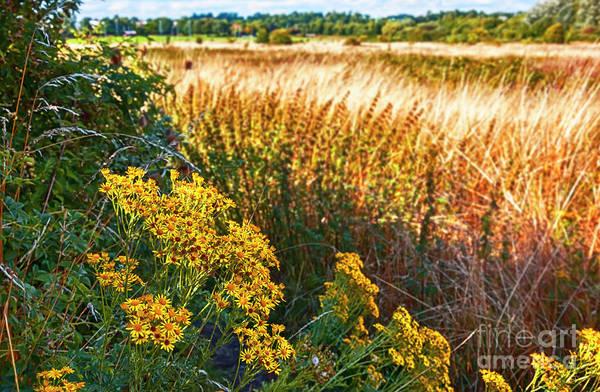 Photograph - summer English field by Ariadna De Raadt